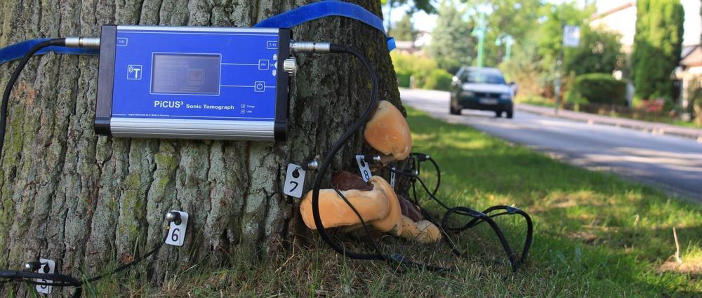 valutazione stabilità alberi