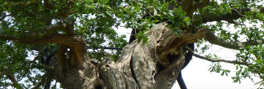 valutazione sbabilità alberi