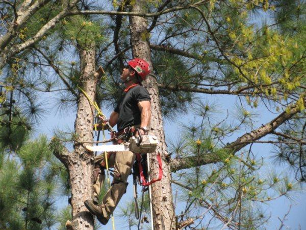 Abbattimento controllato Tree Climbing