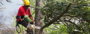 Potatura alberi Perugia con Tree Climbing