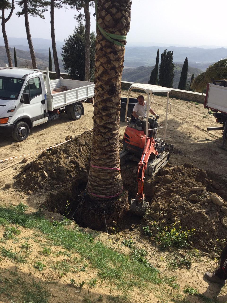 tutoraggio palma giardino