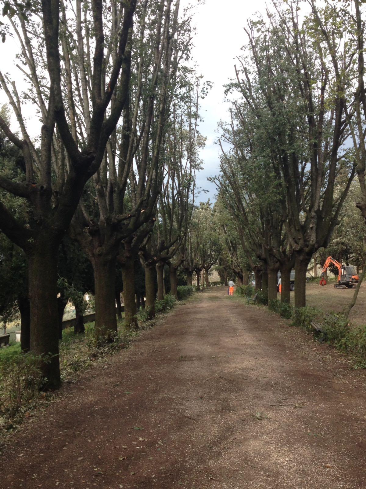 potatura di contenimento delle chiome per i lecci Villa Fidelia