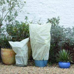 proteggi le piante dai colpi di coda dell'inverno