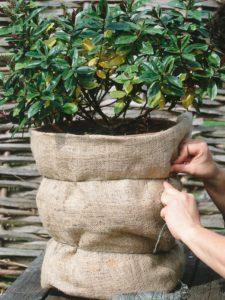 proteggi le piante dal freddo con la iuta