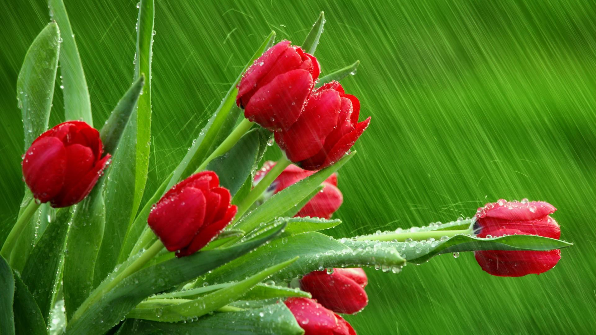 proteggi le piante dalla pioggia e dal freddo